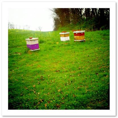 Walt's Swarmbustin' Hives